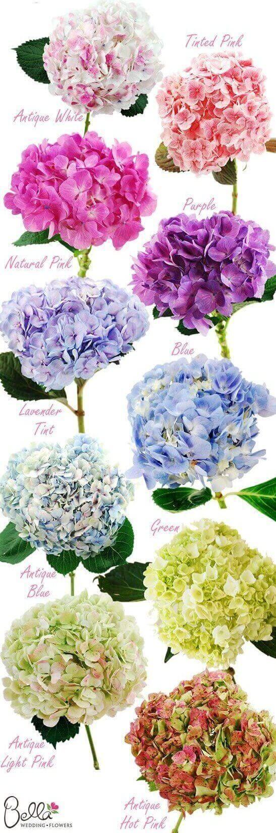 Hortensias una decoraci n de boda ideal argyor mx - Decoracion con hortensias ...